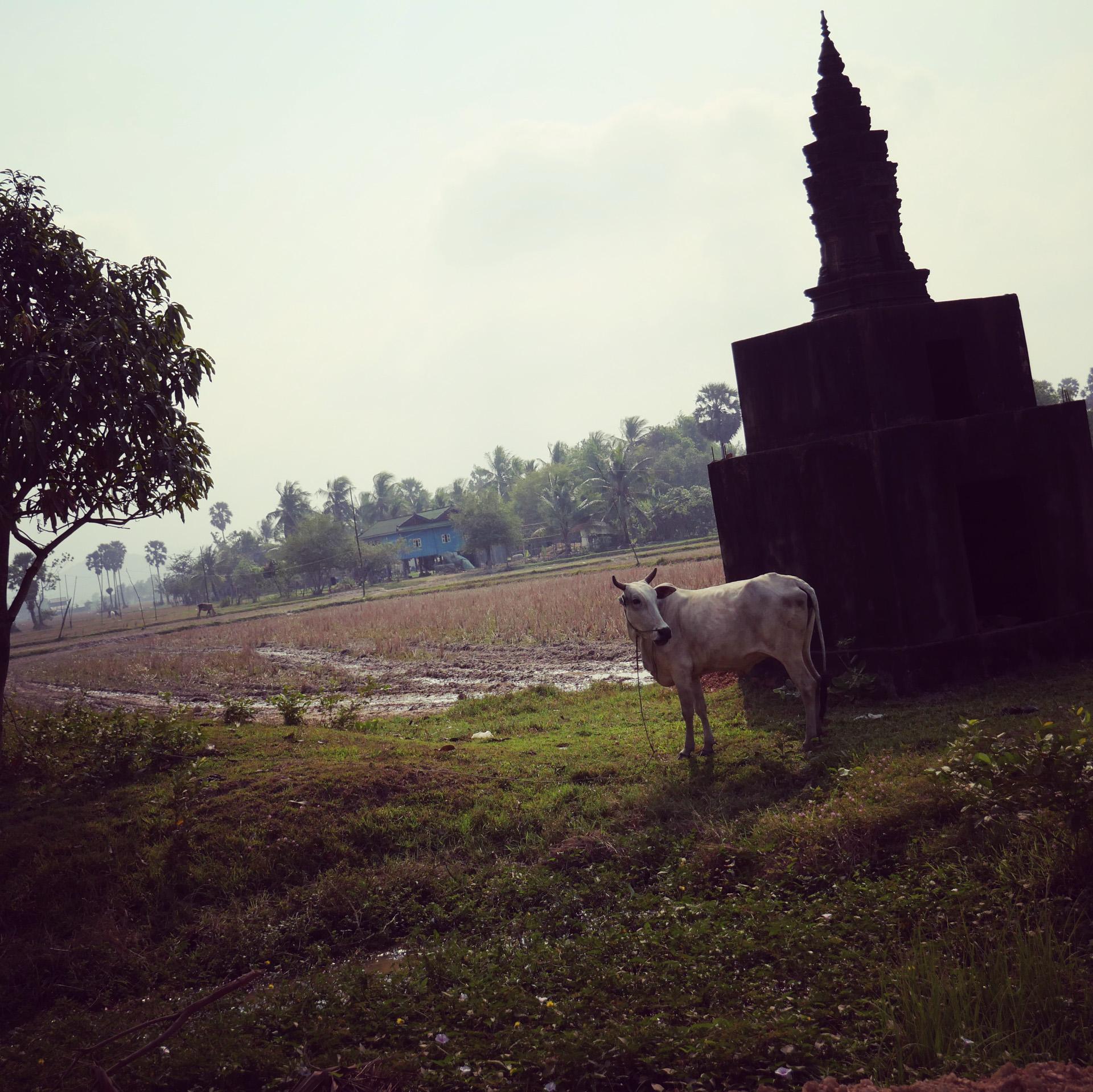 Cambodia-6129